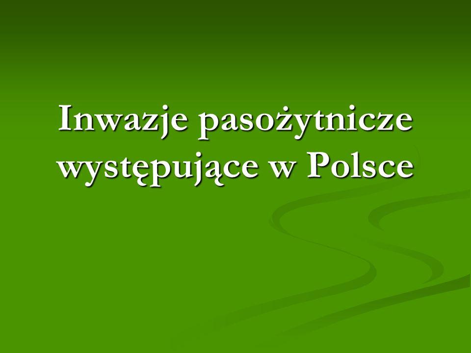 Inwazje pasożytnicze występujące w Polsce