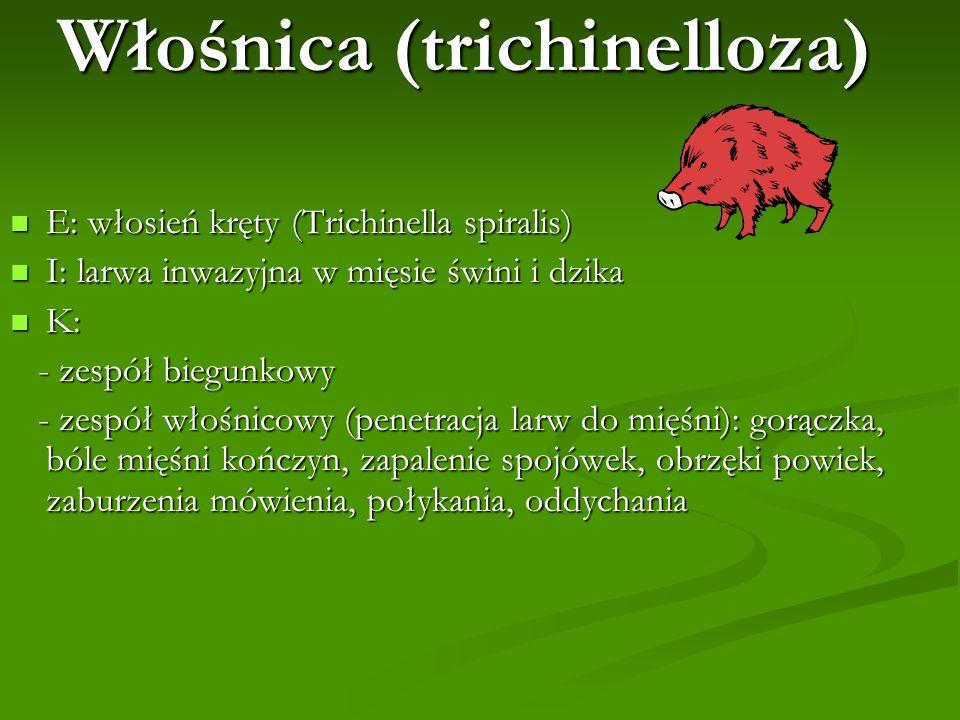 Włośnica (trichinelloza)