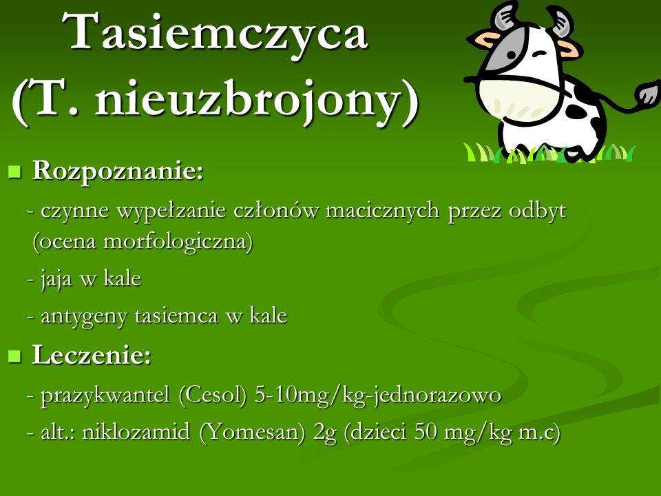 Tasiemczyca (T. nieuzbrojony)