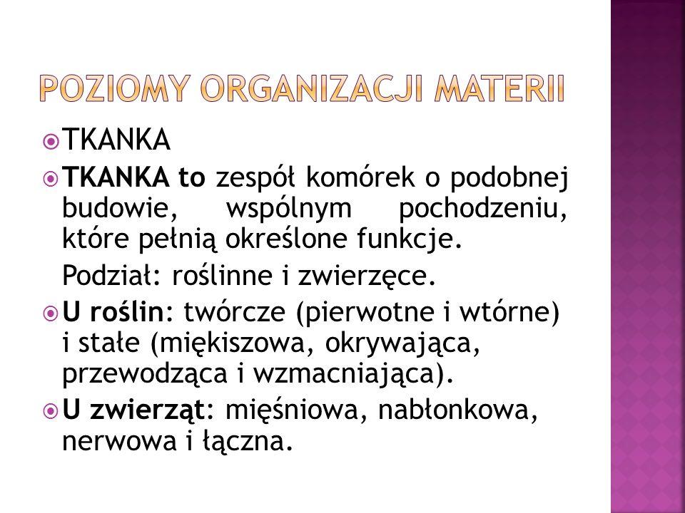 POZIOMY ORGANIZACJI MATERII