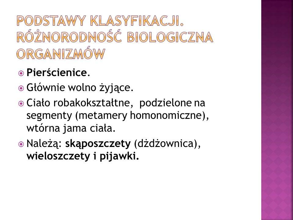 PODSTAWY KLASYFIKACJI. RÓŻNORODNOŚĆ BIOLOGICZNA ORGANIZMÓW