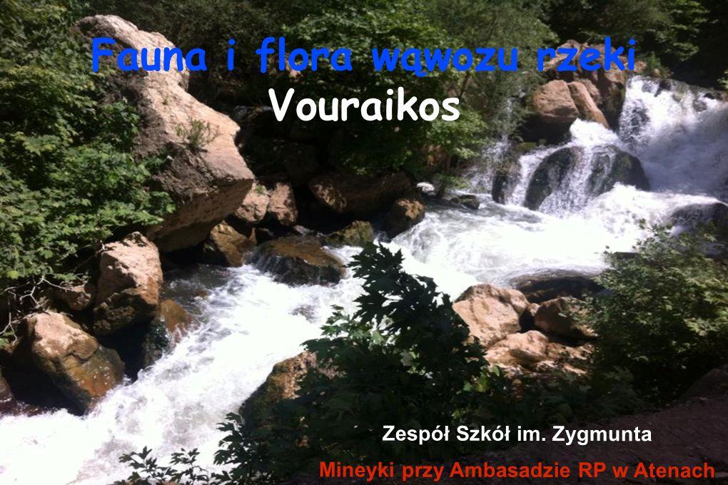 Fauna i flora wąwozu rzeki Vouraikos