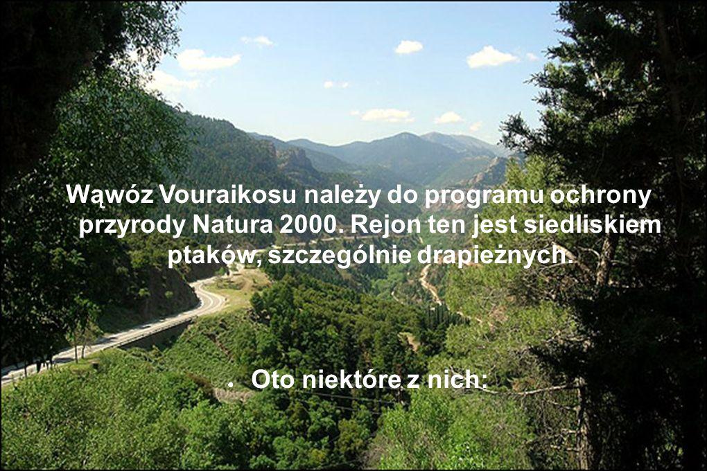 Wąwóz Vouraikosu należy do programu ochrony przyrody Natura 2000