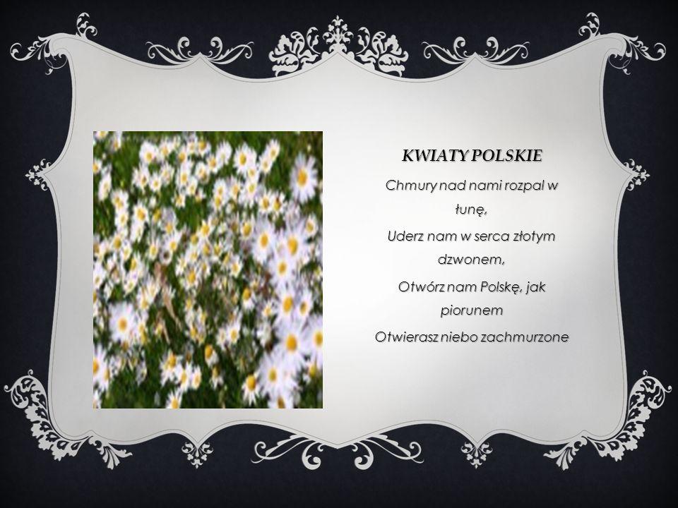 Kwiaty polskie Chmury nad nami rozpal w łunę,