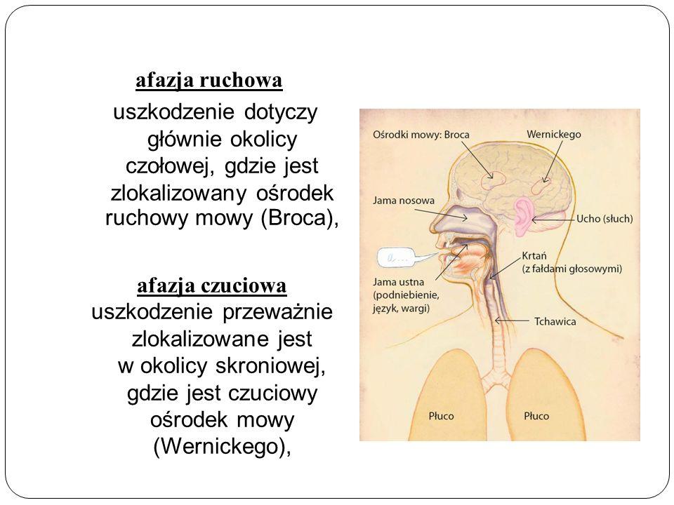 afazja ruchowa uszkodzenie dotyczy głównie okolicy czołowej, gdzie jest zlokalizowany ośrodek ruchowy mowy (Broca),