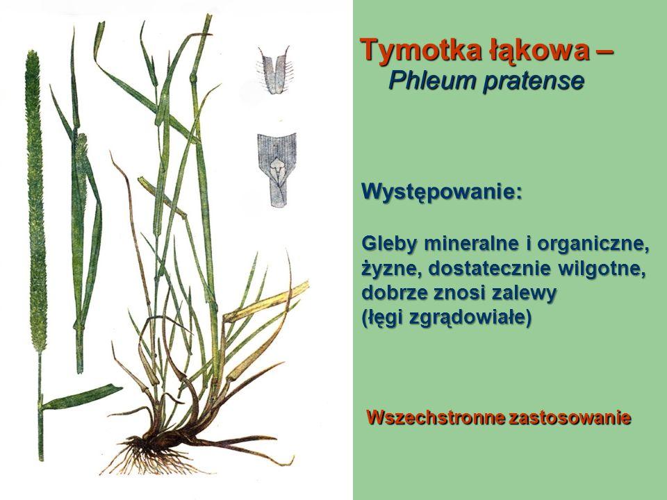 Tymotka łąkowa – Phleum pratense