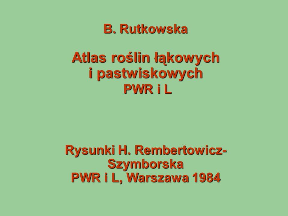 B. Rutkowska Atlas roślin łąkowych i pastwiskowych PWR i L Rysunki H