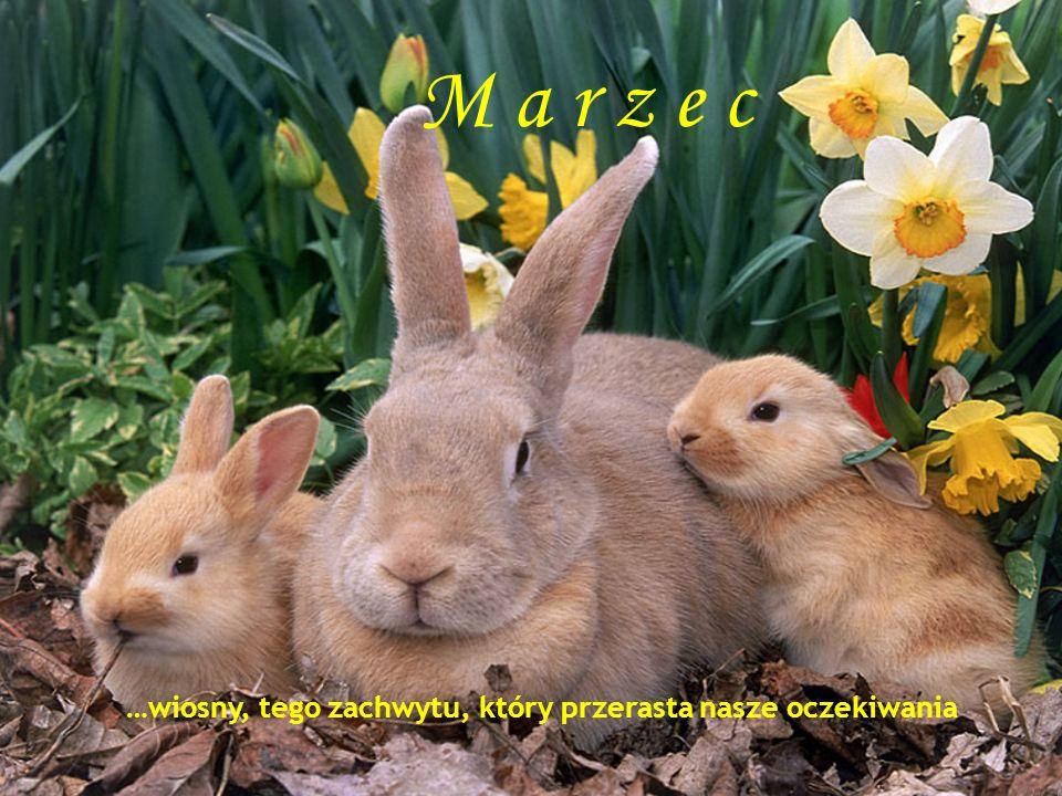 M a r z e c Marzec …wiosny, tego zachwytu, który przerasta nasze oczekiwania