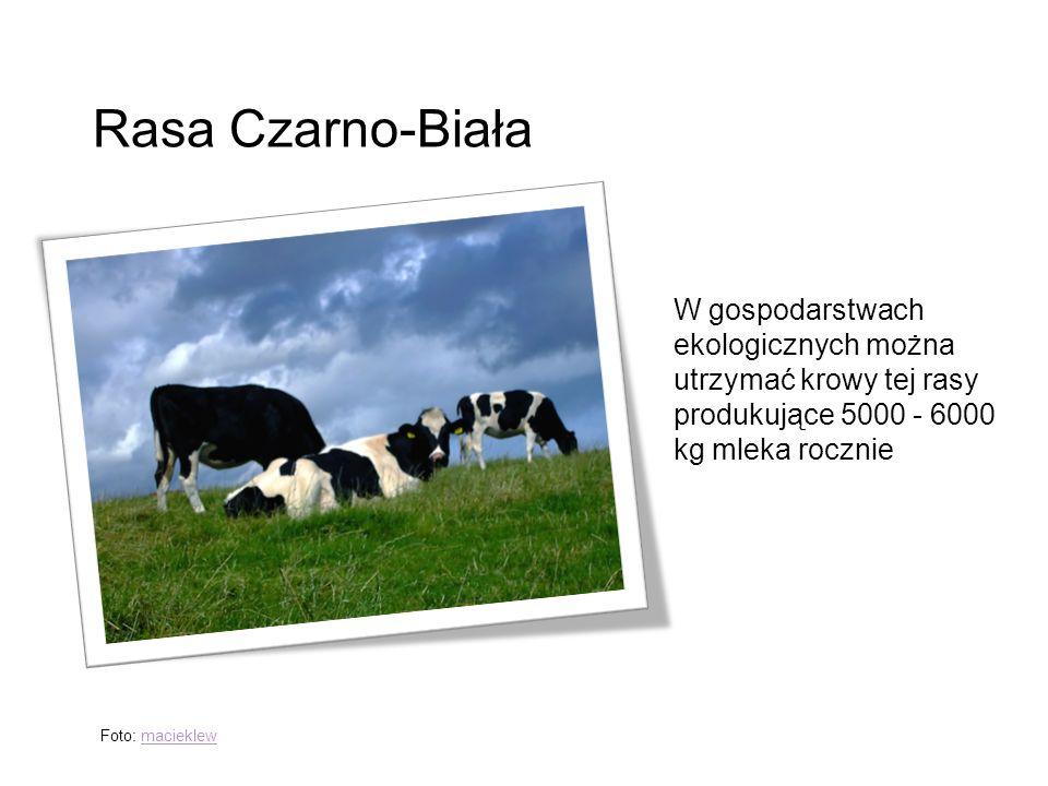 Rasa Czarno-Biała W gospodarstwach ekologicznych można utrzymać krowy tej rasy produkujące 5000 - 6000 kg mleka rocznie.