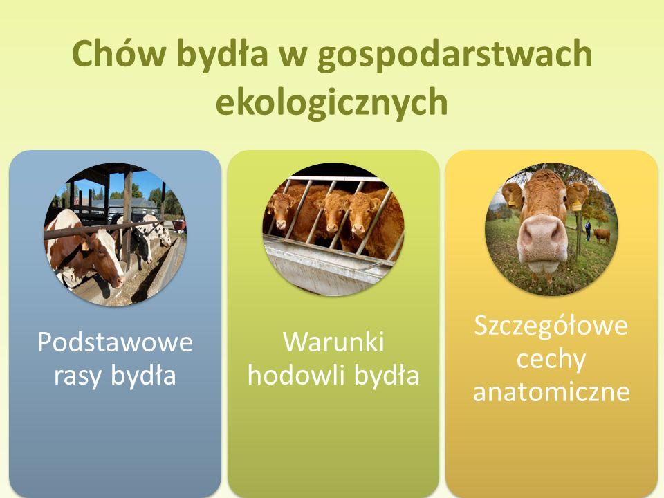 Chów bydła w gospodarstwach ekologicznych