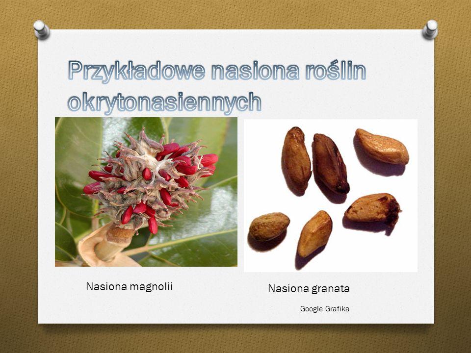 Przykładowe nasiona roślin okrytonasiennych