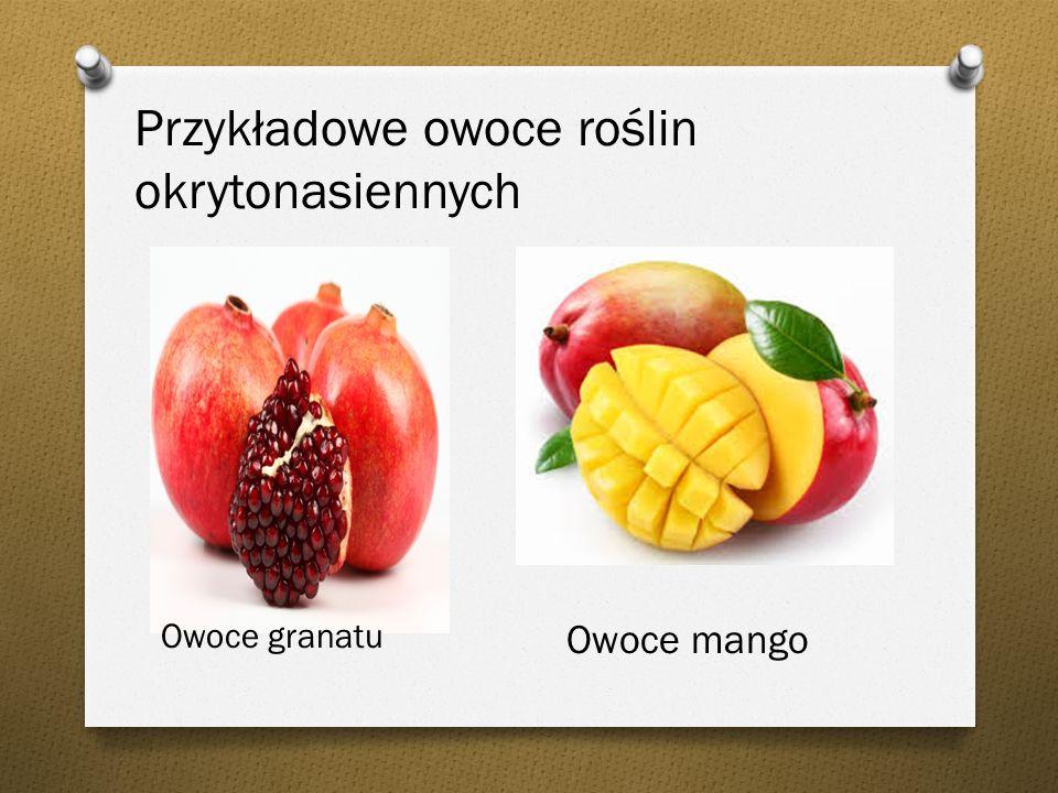 Przykładowe owoce roślin okrytonasiennych