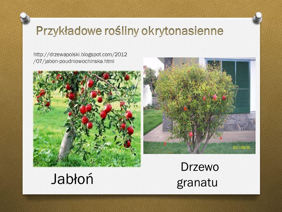 Drzewo granatu Jabłoń Przykładowe rośliny okrytonasienne