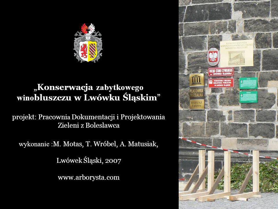 """""""Konserwacja zabytkowego winobluszczu w Lwówku Śląskim"""