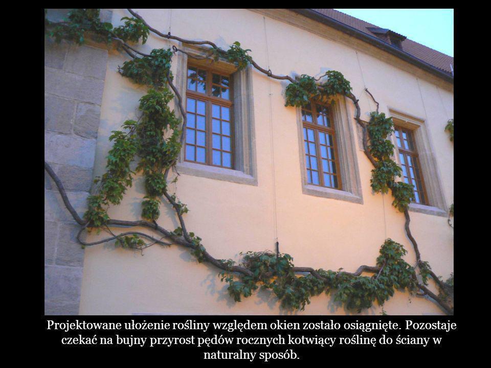 Projektowane ułożenie rośliny względem okien zostało osiągnięte
