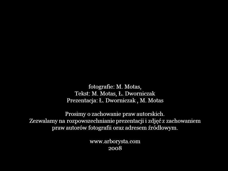 Tekst: M. Motas, Ł. Dworniczak Prezentacja: Ł. Dworniczak , M. Motas
