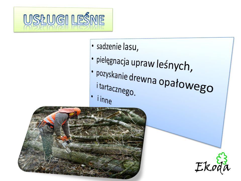 USŁUGI LEŚNE sadzenie lasu, pielęgnacja upraw leśnych,