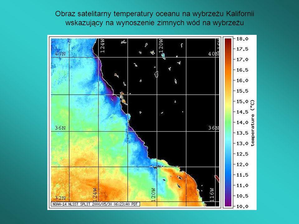 Obraz satelitarny temperatury oceanu na wybrzeżu Kalifornii wskazujący na wynoszenie zimnych wód na wybrzeżu