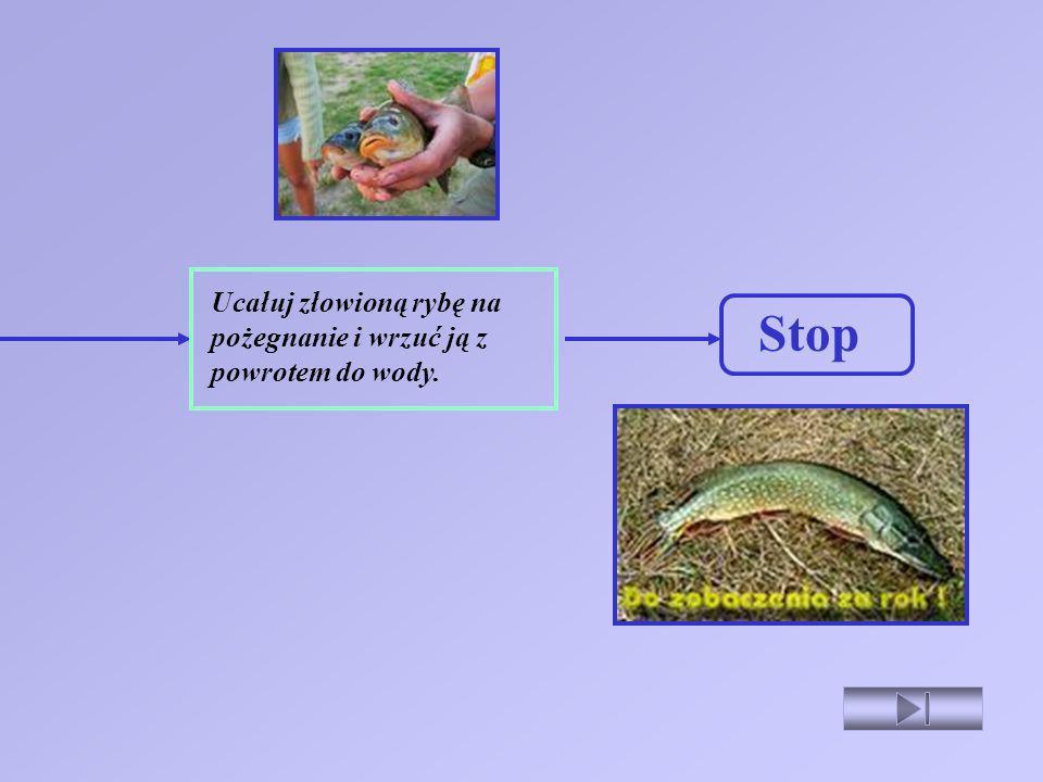 Ucałuj złowioną rybę na pożegnanie i wrzuć ją z powrotem do wody.