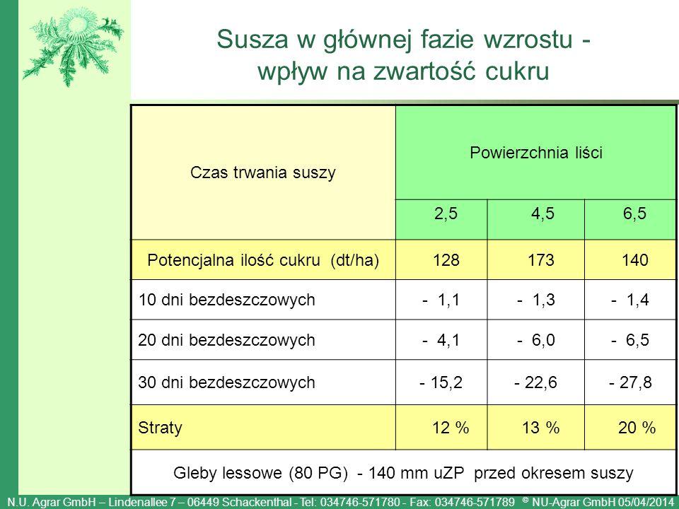 Susza w głównej fazie wzrostu - wpływ na zwartość cukru