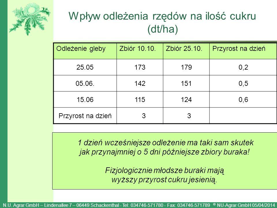 Wpływ odleżenia rzędów na ilość cukru (dt/ha)