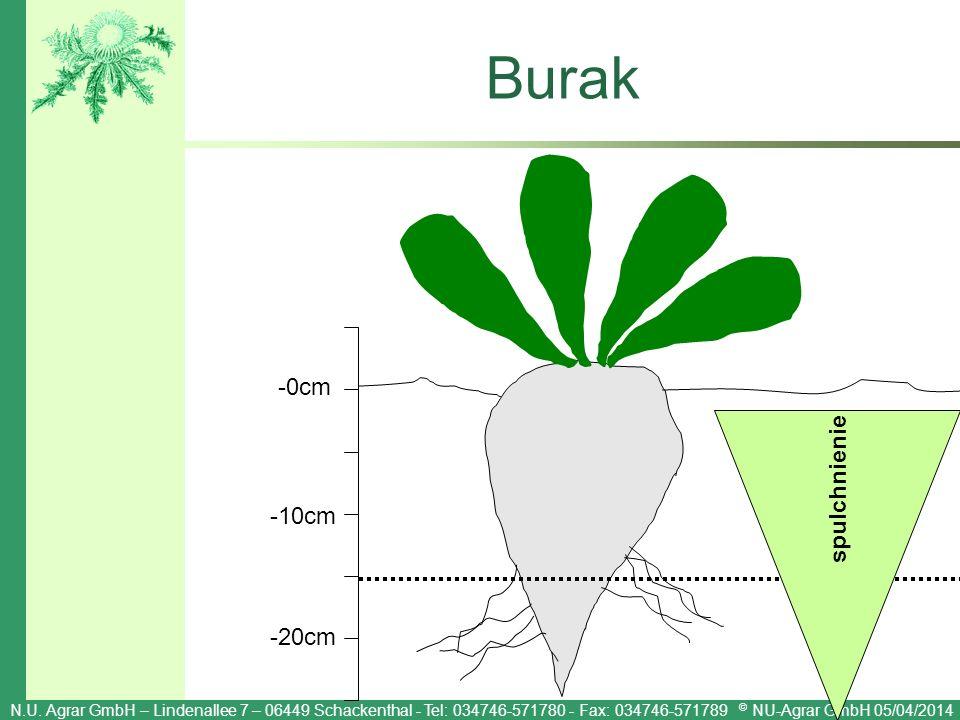Burak -0cm spulchnienie -10cm -20cm