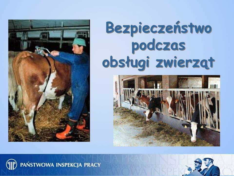Bezpieczeństwo podczas obsługi zwierząt