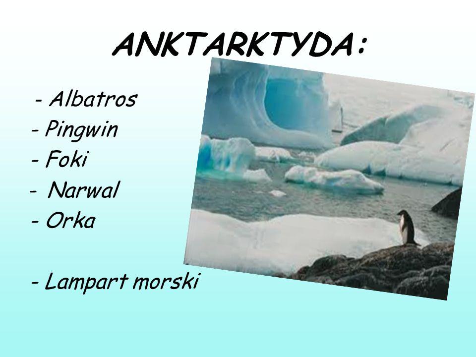 ANKTARKTYDA: - Albatros - Pingwin - Foki Narwal - Orka