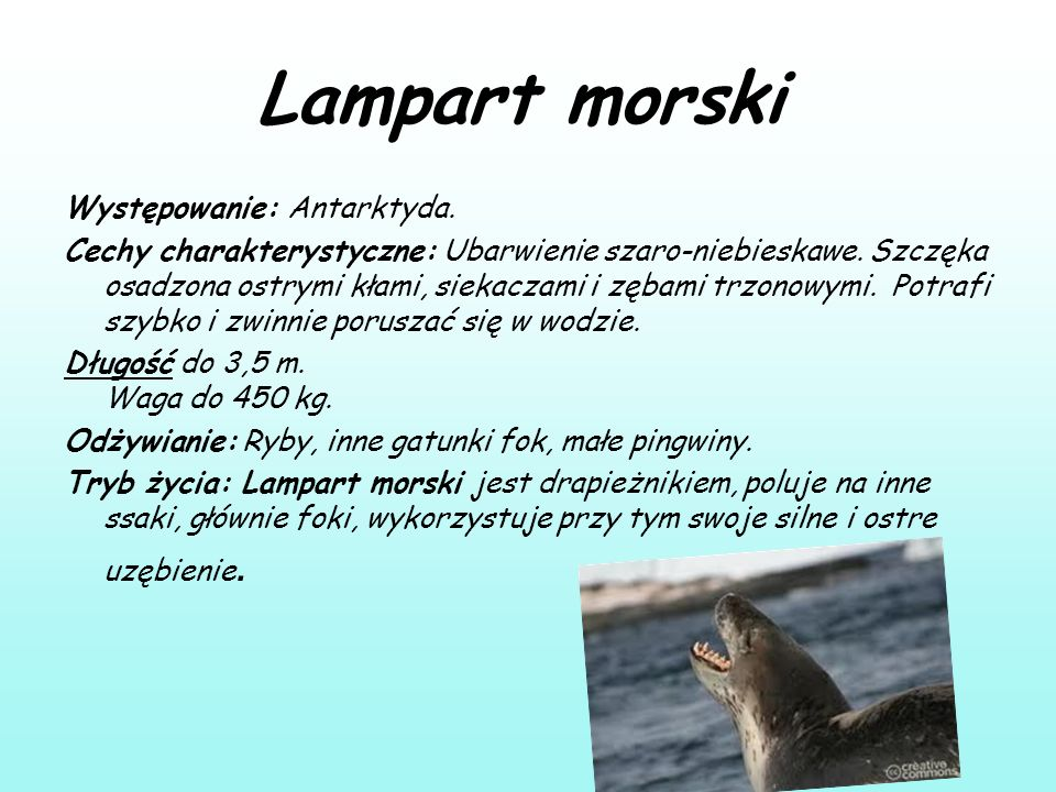 Lampart morski Występowanie: Antarktyda.