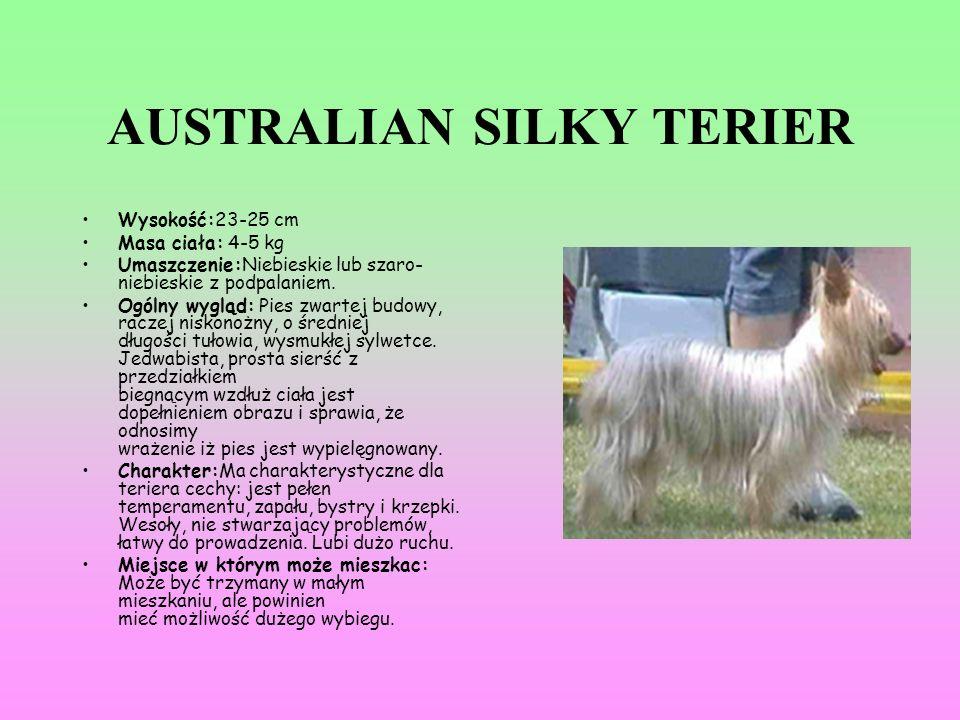 AUSTRALIAN SILKY TERIER