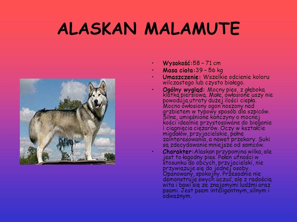 ALASKAN MALAMUTE Wysokość:58 – 71 cm Masa ciała:39 – 56 kg