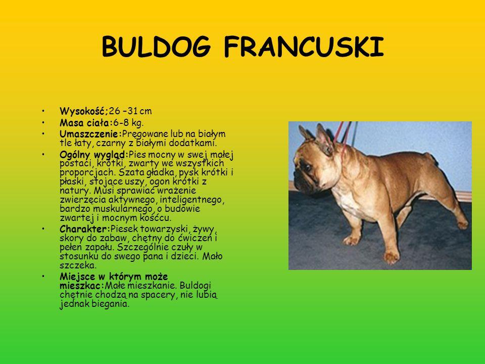 BULDOG FRANCUSKI Wysokość;26 –31 cm Masa ciała:6-8 kg.