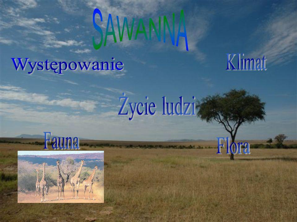 SAWANNA Klimat Występowanie Życie ludzi Fauna Flora