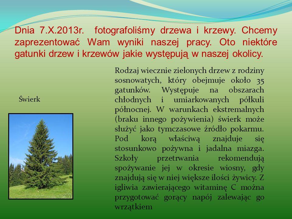 Dnia 7. X. 2013r. fotografoliśmy drzewa i krzewy