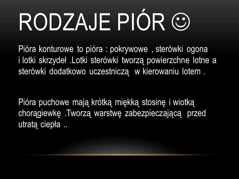 RODZAJE PIÓR 