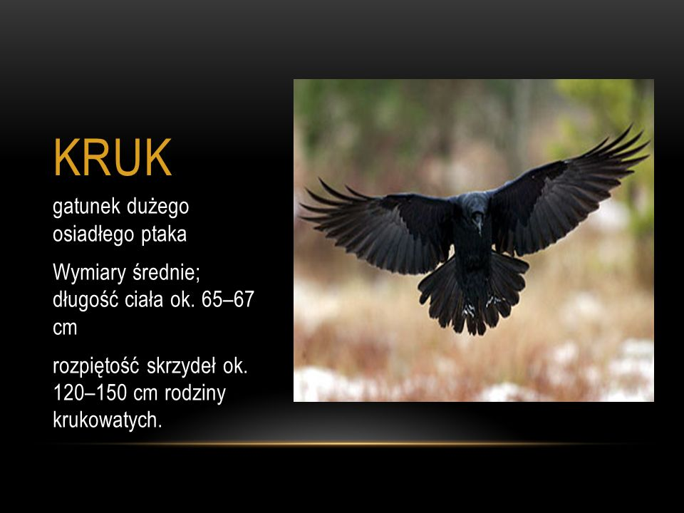 KRUK gatunek dużego osiadłego ptaka