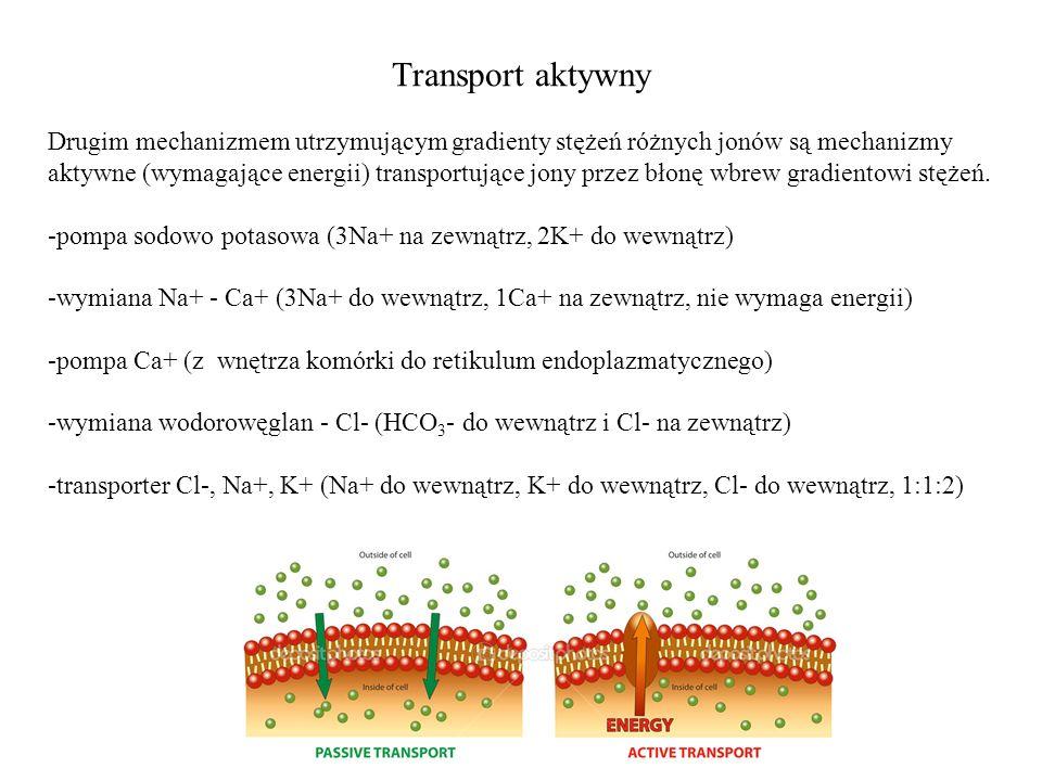 Transport aktywny