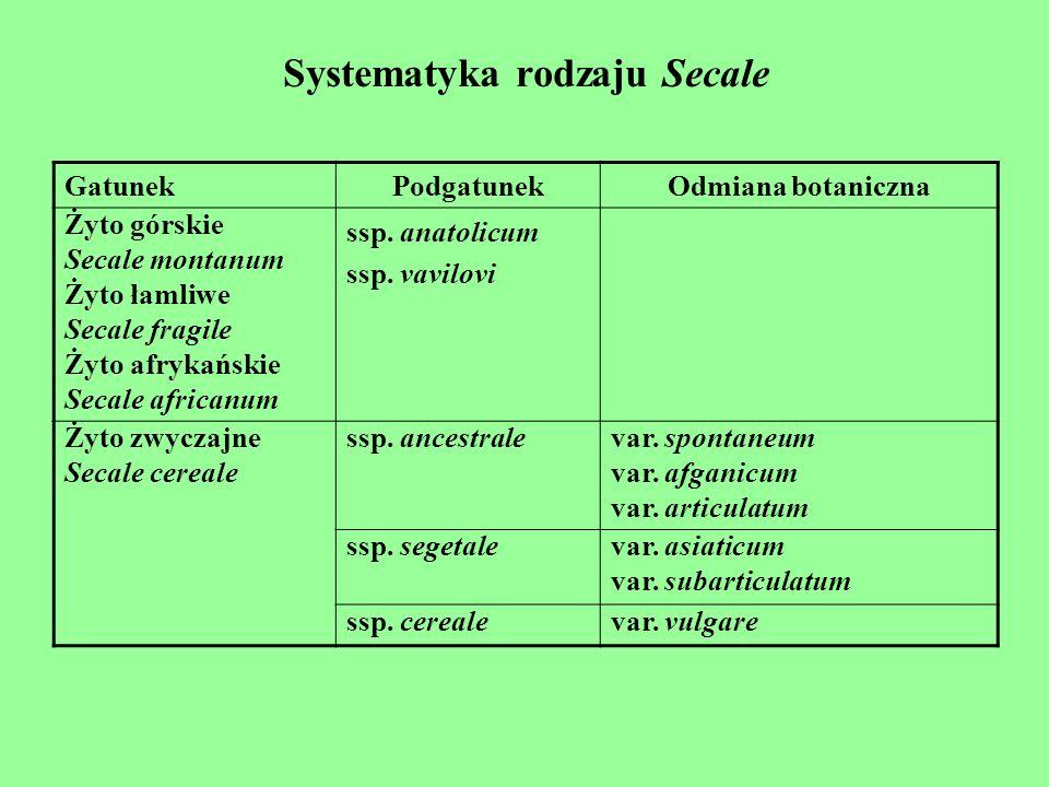 Systematyka rodzaju Secale