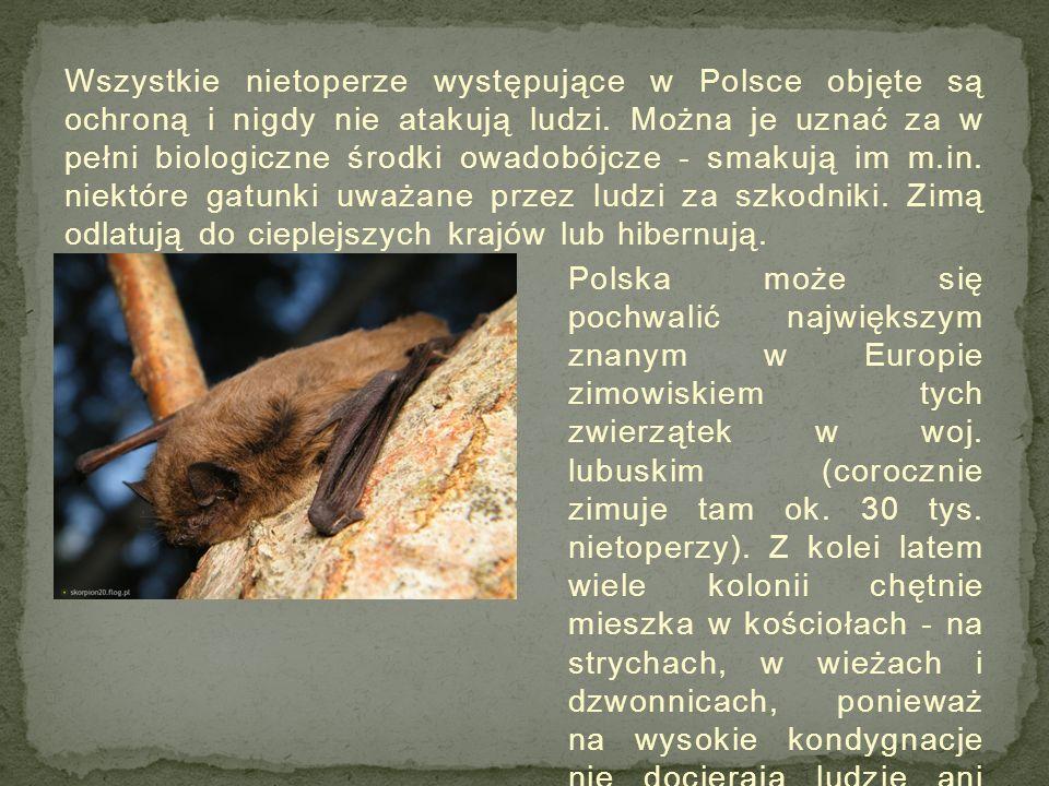Wszystkie nietoperze występujące w Polsce objęte są ochroną i nigdy nie atakują ludzi. Można je uznać za w pełni biologiczne środki owadobójcze - smakują im m.in. niektóre gatunki uważane przez ludzi za szkodniki. Zimą odlatują do cieplejszych krajów lub hibernują.