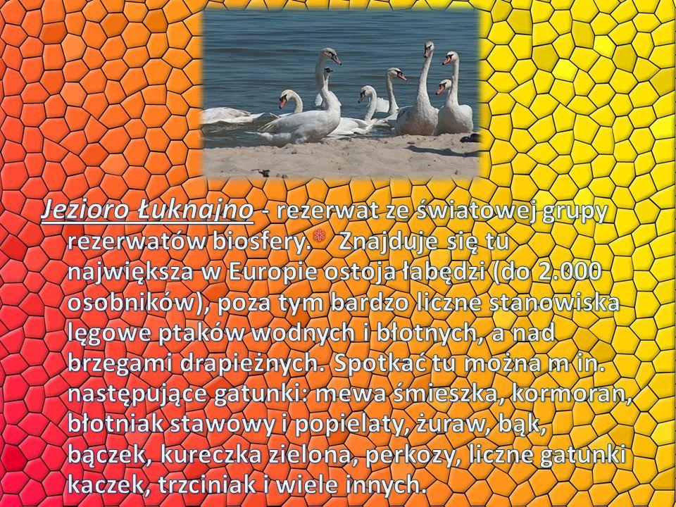 Jezioro Łuknajno - rezerwat ze światowej grupy rezerwatów biosfery