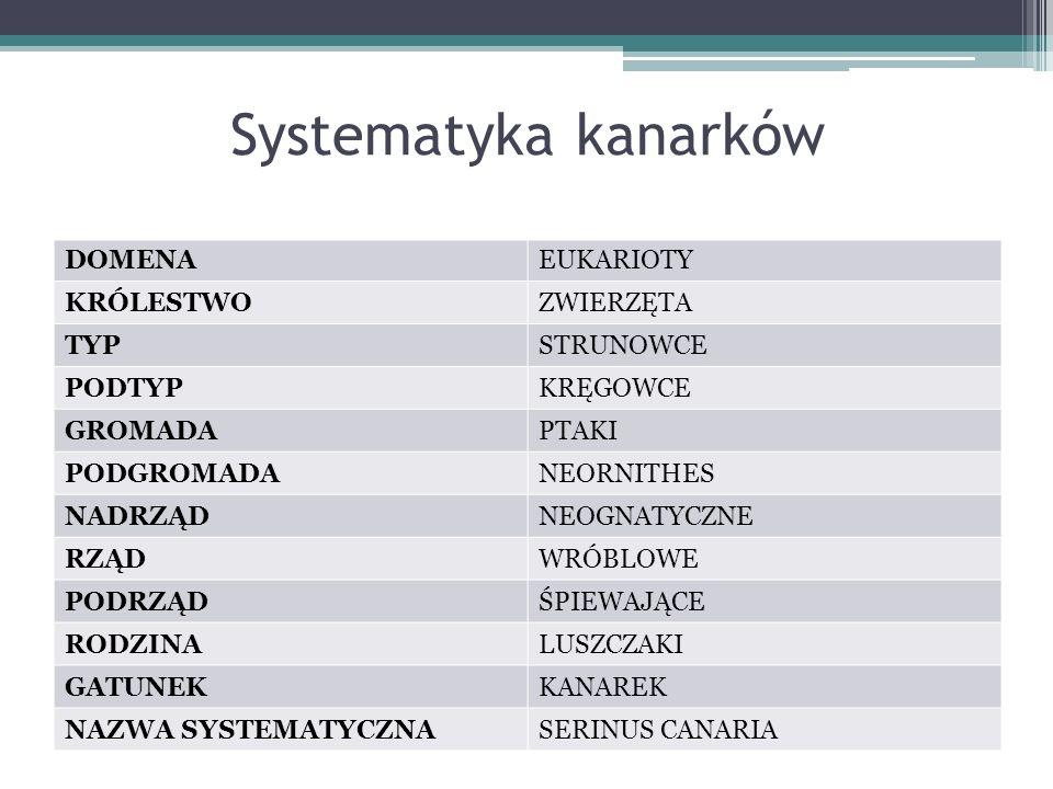 Systematyka kanarków DOMENA EUKARIOTY KRÓLESTWO ZWIERZĘTA TYP