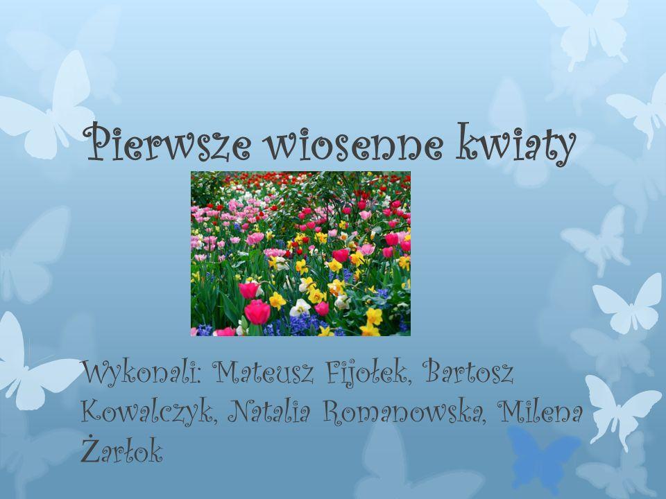 Pierwsze wiosenne kwiaty