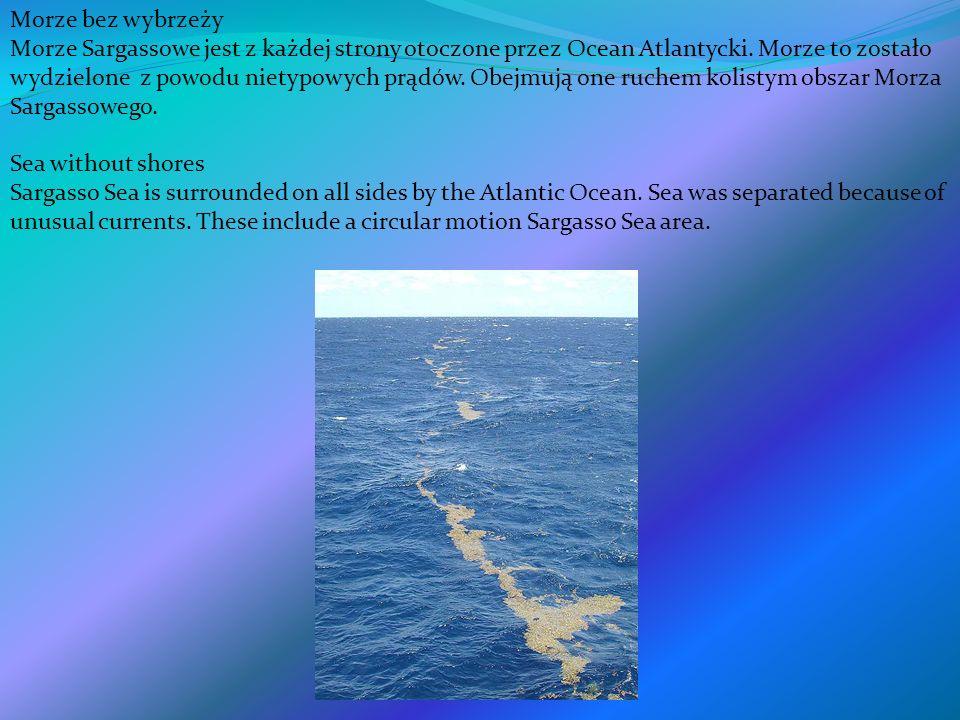 Morze bez wybrzeży