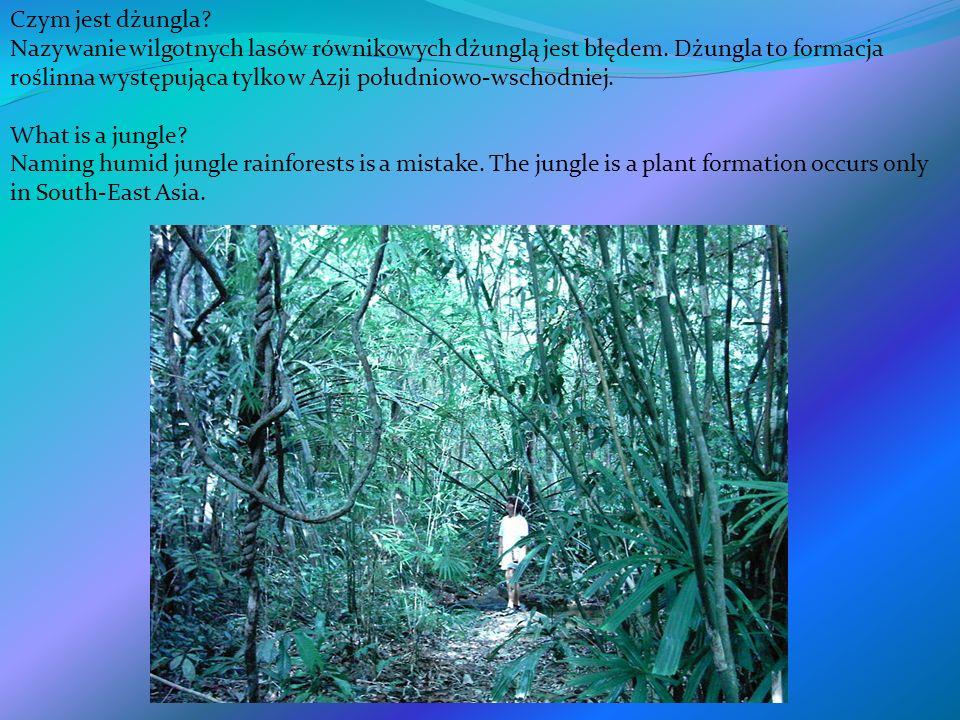 Czym jest dżungla