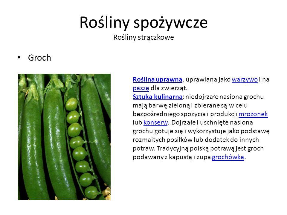 Rośliny spożywcze Rośliny strączkowe