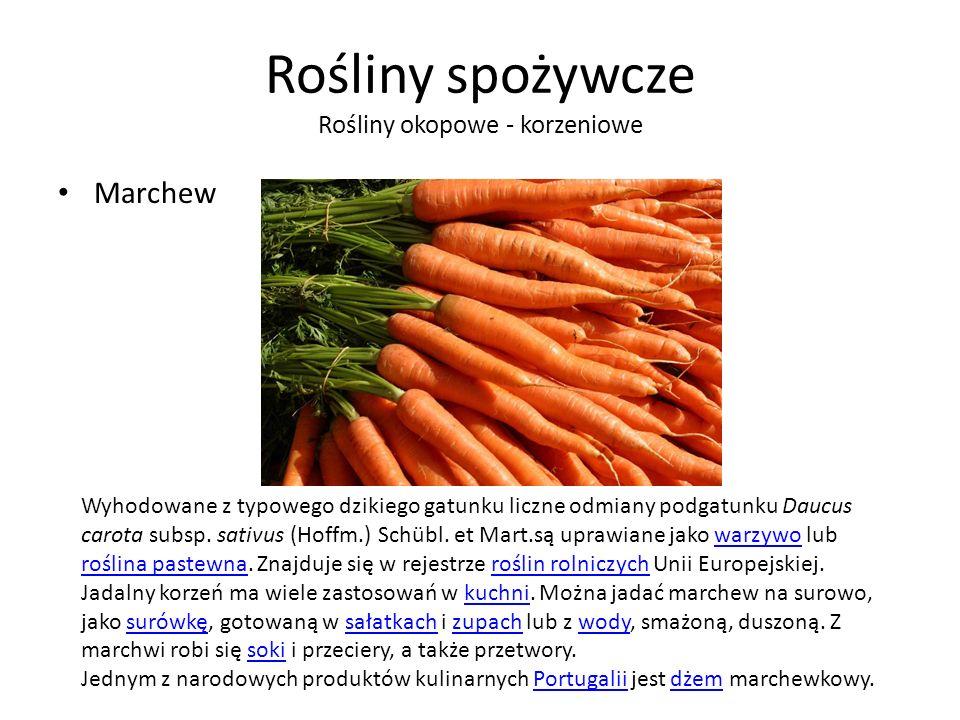 Rośliny spożywcze Rośliny okopowe - korzeniowe