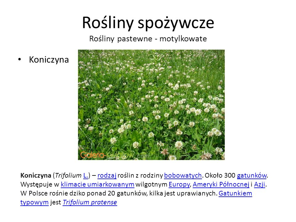 Rośliny spożywcze Rośliny pastewne - motylkowate
