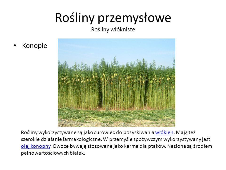 Rośliny przemysłowe Rośliny włókniste