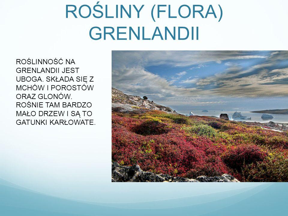 ROŚLINY (FLORA) GRENLANDII