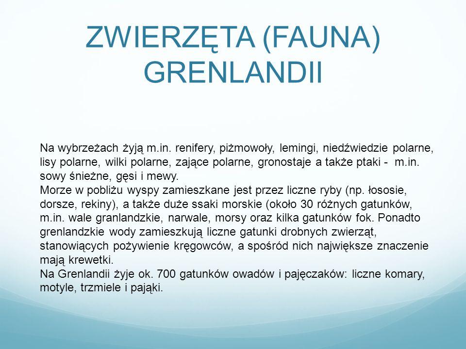ZWIERZĘTA (FAUNA) GRENLANDII